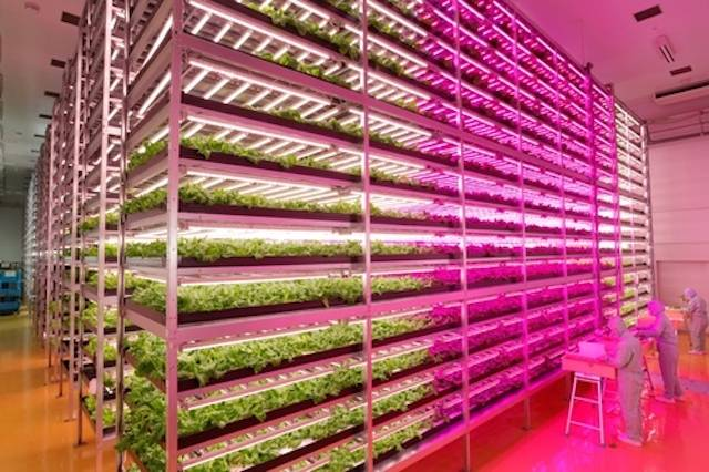 GE-LED-lights-indoor-farm.jpg.662x0_q70_crop-scale